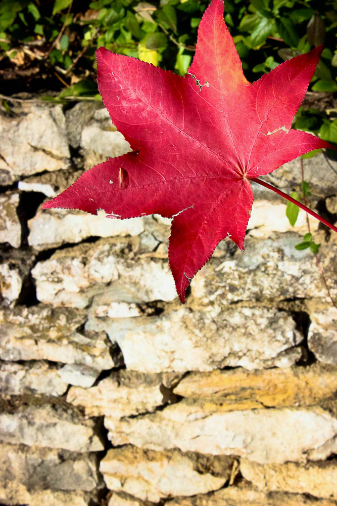Red leaf set against stone wall