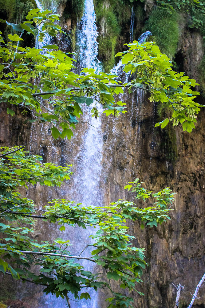 Waterfall behind branches