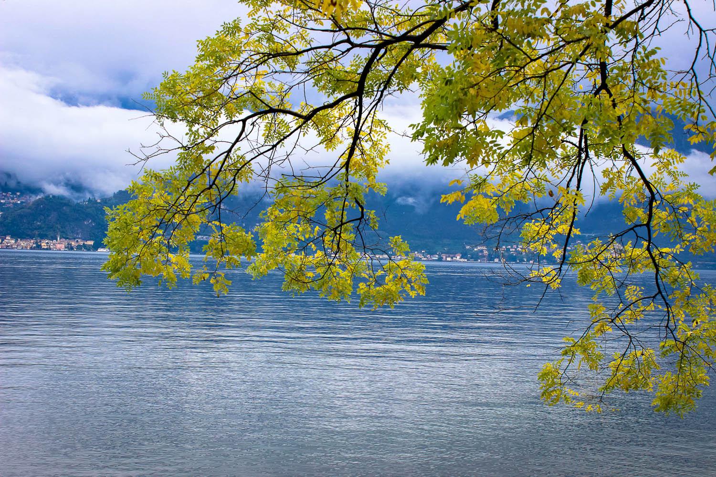 Green tree branch descending over lake